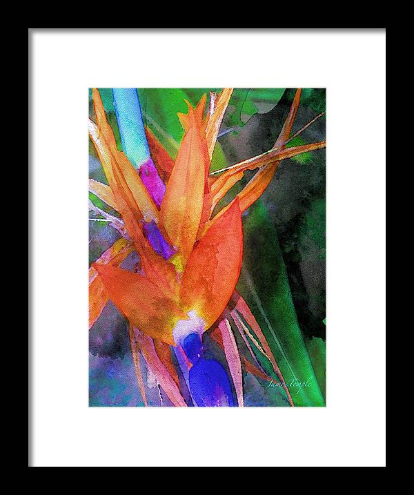 Bird Of Paradise Framed Print featuring the digital art Hawaiian Abstract by James Temple