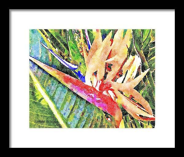 Bird Of Paradise Framed Print featuring the digital art Hawaiian Bird of Paradise by James Temple