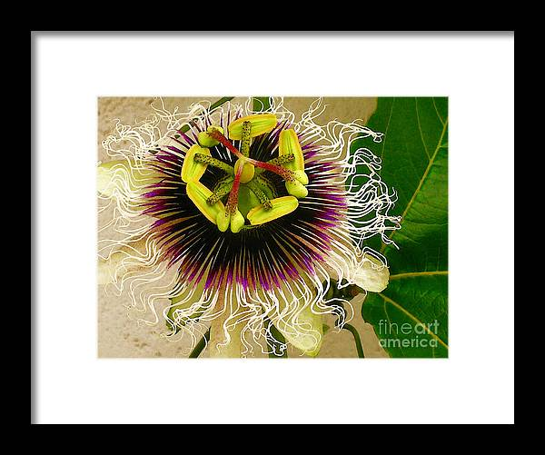 Passion Fruit Flower Framed Print featuring the photograph Hawaiian Lilikoi by James Temple