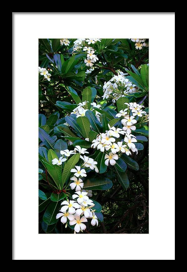 Plumeria Framed Print featuring the photograph Hawaiian Plumeria by James Temple