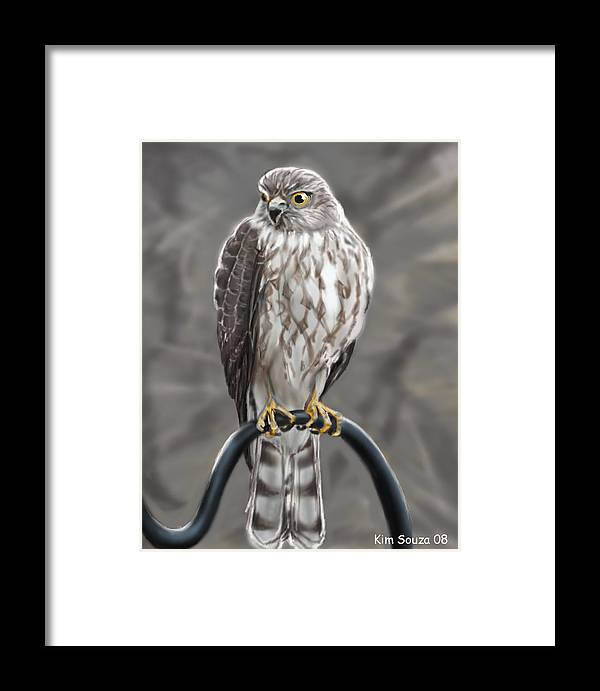 Birds Framed Print featuring the painting Hawk by Kim Souza