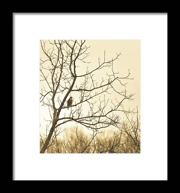 Hawk Framed Print featuring the photograph Hawk by Michelle Rollins