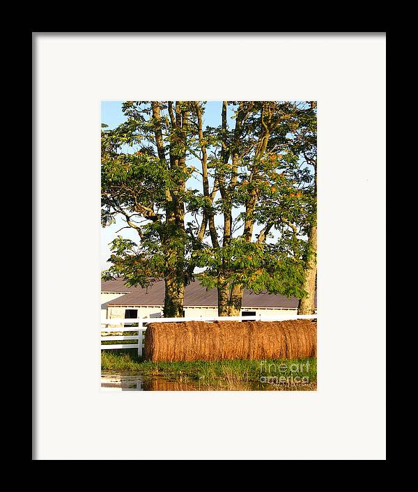 Landscape Framed Print featuring the photograph Hay Bales And Trees by Todd A Blanchard