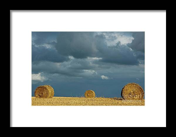 Agricultural Framed Print featuring the photograph Hay Bales In Harvested Corn Field by Sami Sarkis