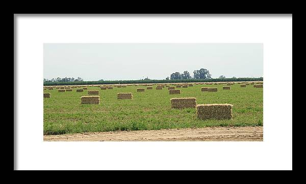 Hay Framed Print featuring the photograph Hay Bales by Joshua Sunday