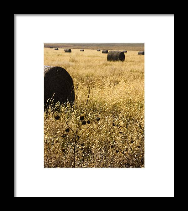 Hay Framed Print featuring the photograph Haybales by Ralph Steinhauer