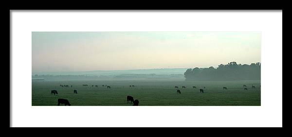 Herd Framed Print featuring the photograph Hazy Grazing by Lynn Reid
