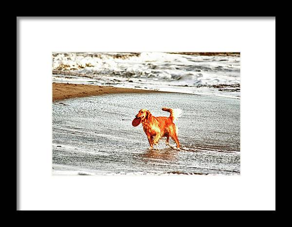 Dog Framed Print featuring the photograph hd 342 Frisbee Dog hdr by Chris Berry