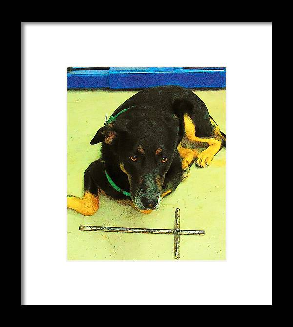 Dog Framed Print featuring the photograph He Gets It by Deborah Montana