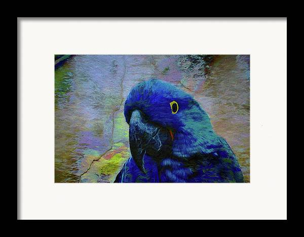 Birds Framed Print featuring the photograph He Just Cracks Me Up by Jan Amiss Photography