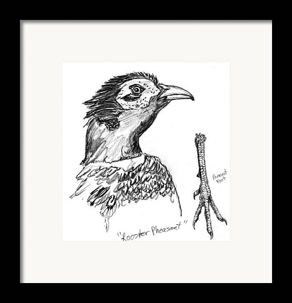 Iowa Framed Print featuring the drawing Head And Foot Of A Chinese Ringneck Rooster Pheasant by Kevin Callahan