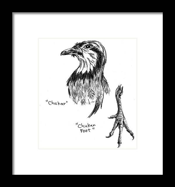 Chukar Framed Print featuring the drawing Head And Foot Of A Chukar by Kevin Callahan