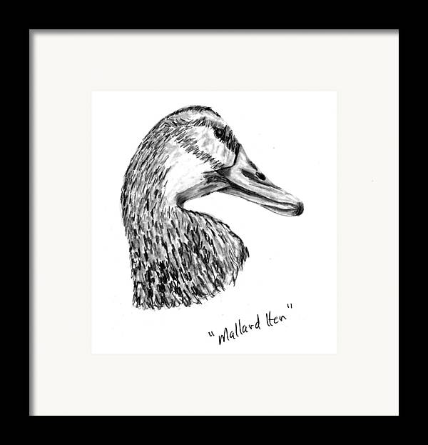 Duck Framed Print featuring the drawing Head Of A Mallard Hen by Kevin Callahan