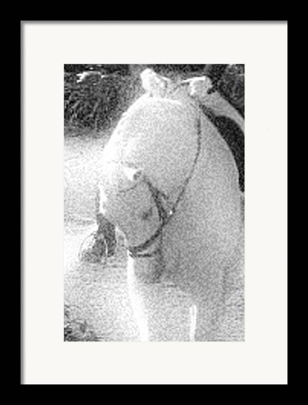 Horse Framed Print featuring the photograph Head Tuck by Donna Thomas