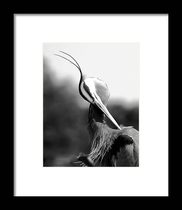 Framed Print featuring the photograph Headdress by Joseph Reilly