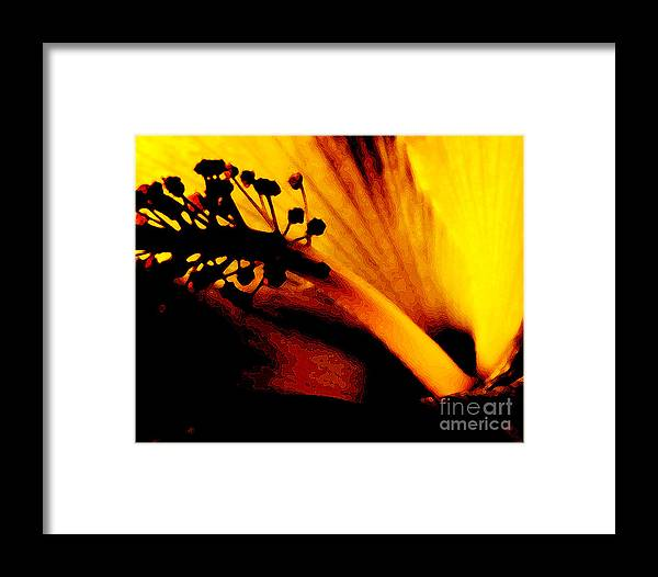 Flower Framed Print featuring the photograph Heat by Linda Shafer