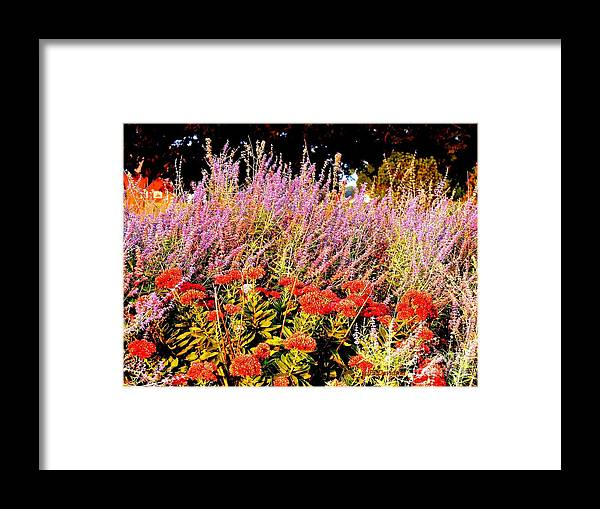 Gardens Framed Print featuring the photograph Heather And Sedum by Patricia L Davidson