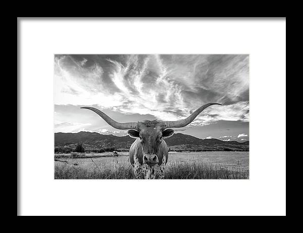 Cow Framed Print featuring the photograph Heber Valley Longhorn by Johnny Adolphson