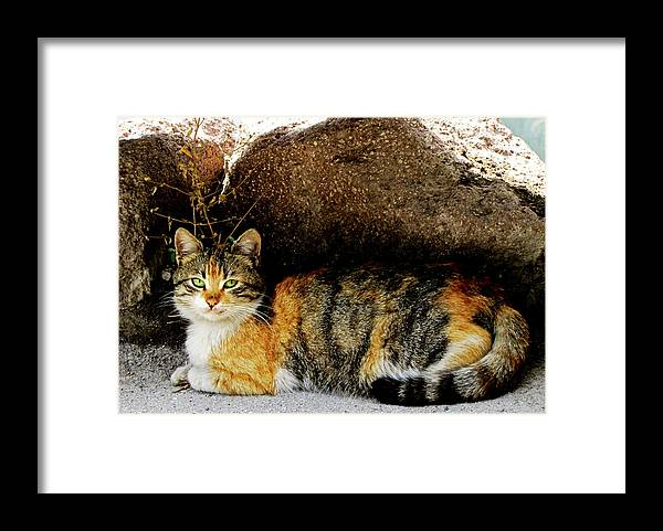 Cat Framed Print featuring the photograph Hello Friend IV by Pam Ellis