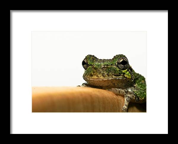 Frog Framed Print featuring the photograph Hello There by Edward Myers