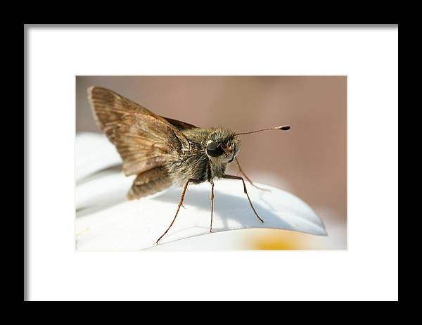 Moth Framed Print featuring the photograph Hello There. by Jason Hochman