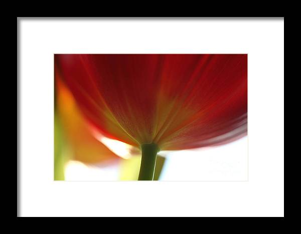 Tulip Framed Print featuring the photograph Help Is Here by Amanda Barcon