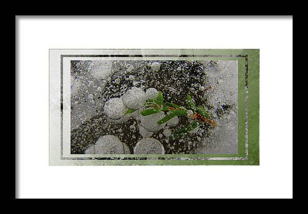 Nature Framed Print featuring the photograph Hemlock In Bubbles by Doug Bratten
