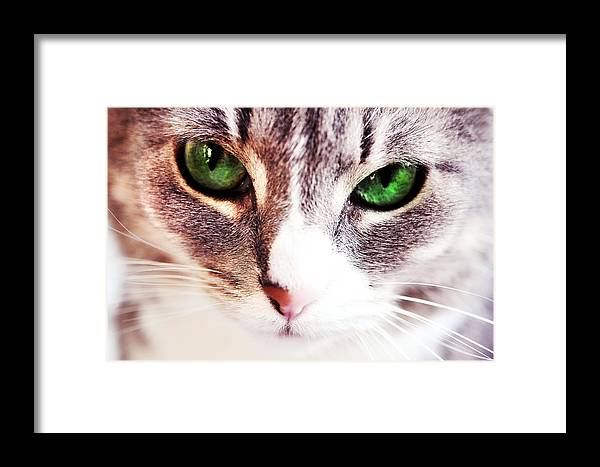 Cat Framed Print featuring the photograph Her Emerald Eyes. Kitty Time by Jenny Rainbow