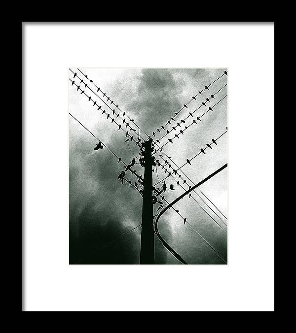Birds Framed Print featuring the photograph Here It Comes by Justin Dyal