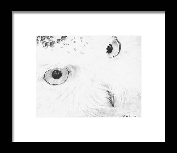 Owl Framed Print featuring the drawing Here's Lookin' At You by Christopher Brooks