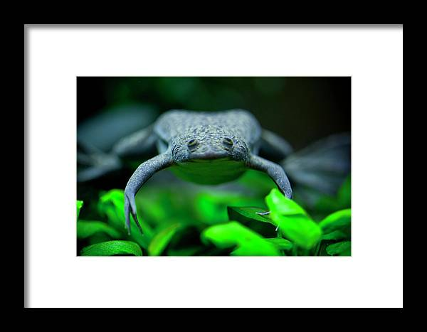 Frog Framed Print featuring the photograph Here's Looking At You by Christina Durity