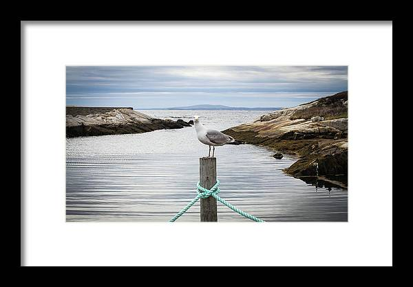 Seagull Framed Print featuring the photograph Here's Looking At You by Ron Vollentine