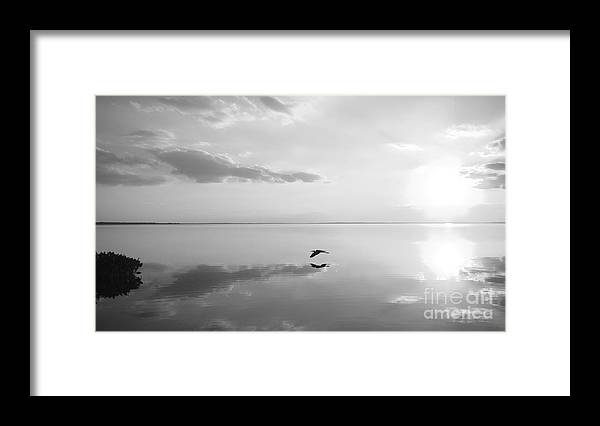 Black Framed Print featuring the photograph Heron Crossing by Jack Norton