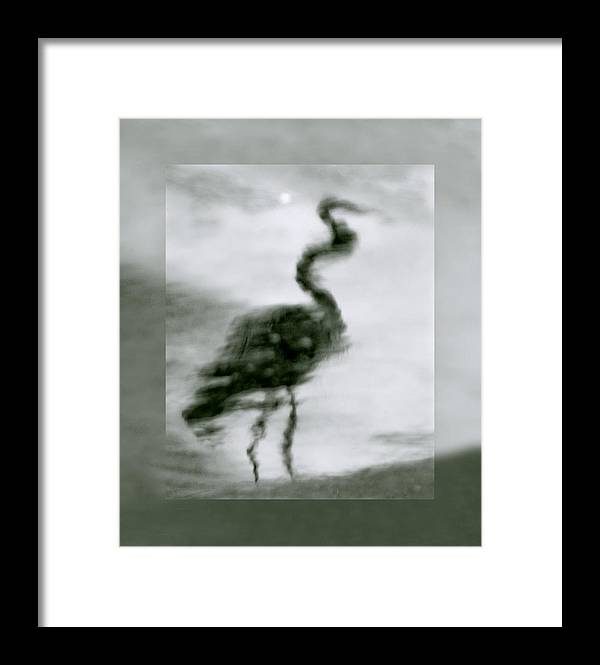 Great Blue Heron Framed Print featuring the photograph Heron De Nacht by Linda McRae