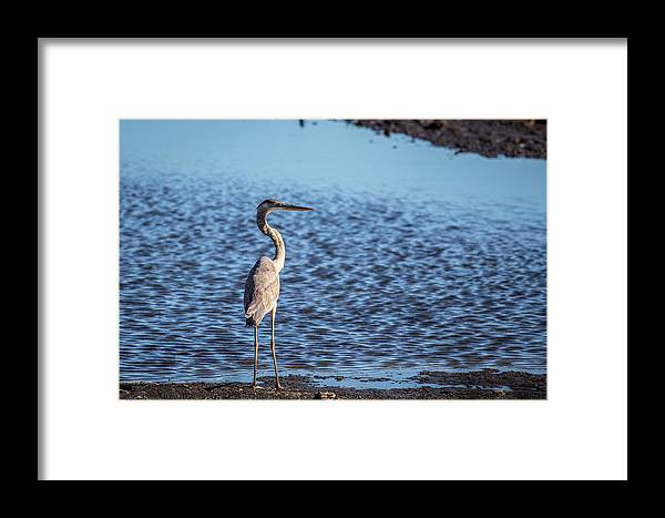 Heron Framed Print featuring the photograph Heron by Ryan Stoddard