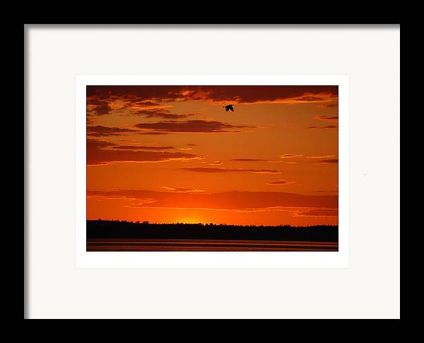 Sunset Framed Print featuring the photograph Heron Sunset by J D Banks