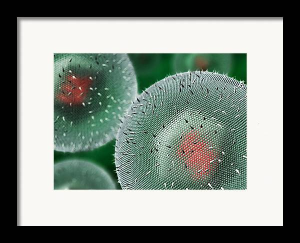 Herpes Framed Print featuring the photograph Herpes Virus by David Mack