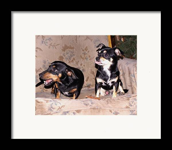 Dogs Framed Print featuring the photograph He's All Mine by Debbie May