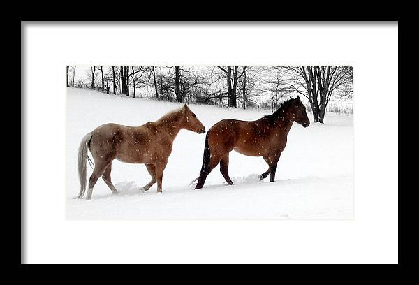 Horse Framed Print featuring the photograph Hestar I Snjo by Scot Johnson