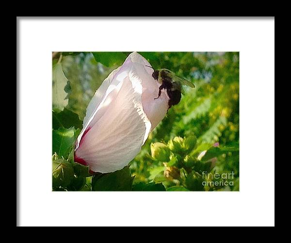 Floral Framed Print featuring the photograph Hey Joe Are You Home by Debra Lynch