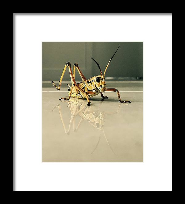 Grasshopper Framed Print featuring the photograph Hi There by Iryna Oliinyk