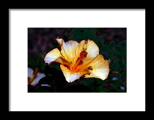 Nature Framed Print featuring the photograph Hibiscus Heat by David Houston