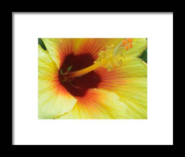 Yellow Framed Print featuring the photograph Hibiscus by Jay Givens