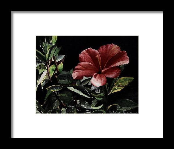 Watercolor Framed Print featuring the painting Hibiscus by Patricia Halstead
