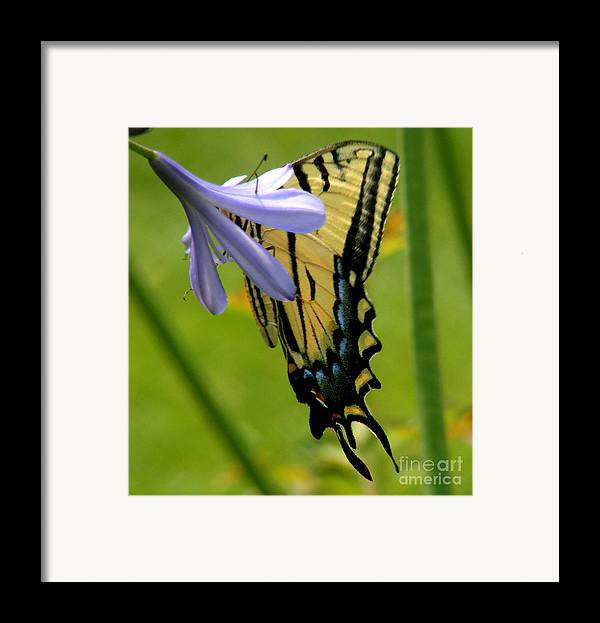 Butterfly Framed Print featuring the photograph Hidden Beauty by Gail Salitui
