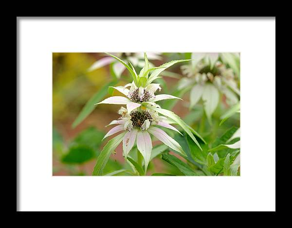 White Framed Print featuring the photograph Hidden Beauty by James Smullins