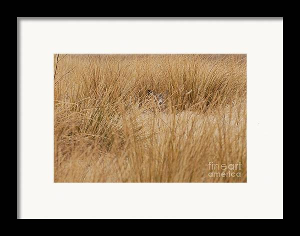 Deer Framed Print featuring the photograph Hidden Mule Deer by Dennis Hammer