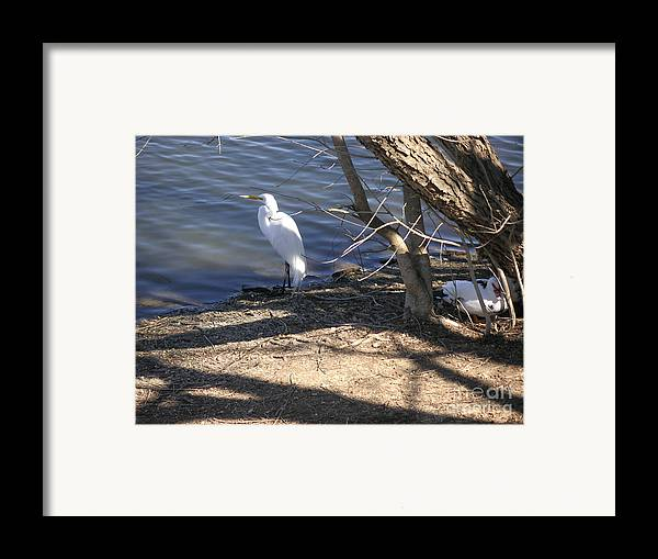 Nature Framed Print featuring the photograph Hiding And Seeking by Lucyna A M Green