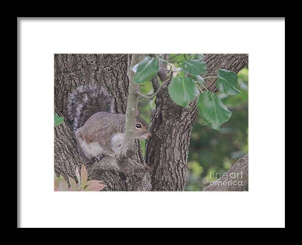 Nature Framed Print featuring the photograph Hiding From The Camera by Linda Langston