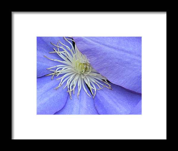 Flowers Framed Print featuring the digital art Hiding by Michele Caporaso